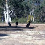 Kangas on the property