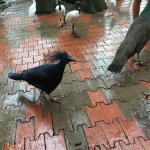 Vögel laufen zwischen uns umher