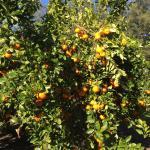 Watkins Orchard