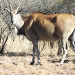 Zdjęcie Dikhololo Game Reserve