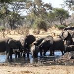 Senyati Safari Camp Foto