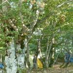 Photo of Camping Monte Prata
