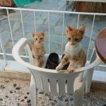 Kittens waiting for breakfast... cute
