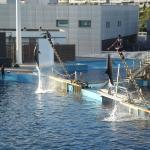 oceanographic spectacle dauphins