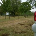 """Bio-Agriturismo Parco Rurale """"Alture di Polazzo"""" Foto"""