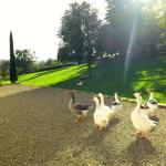 happy geese