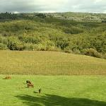 horses in our fields