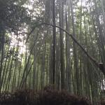 A good place for relaxing your mind with nature. Green scenery of bamboos.