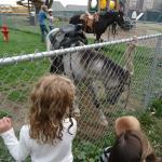 Friday night free pony rides were great!