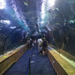 Tunnel Acquario