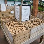 Potato area at Stewarts Christchurch