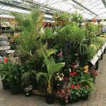 Outdoor plant display at Stewarts Christchurch