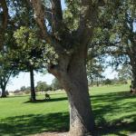 Bidwell Golf Course