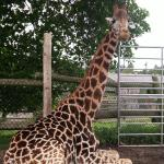 West Midland Safari and Leisure Park