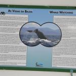 ponto de observação das baleias
