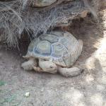 2 tortues dans l htel!