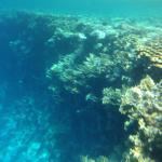 Sharm Plaza Reef