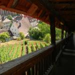 Vineyards from the burg walls