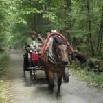 carro con turisti