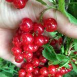 Fruits et confitures