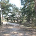 Little Pond Walk