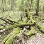 alberi in decomposizione