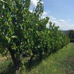 Vineyard View #3