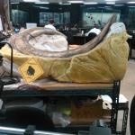 The actual tusks at La Brea Museum
