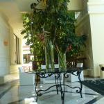 cobba lobby