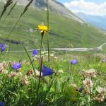 Flowers of many kinds