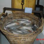 'Herring' in basket