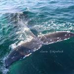 The tail of the baby whale