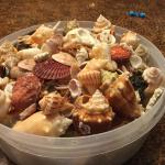 My shelling is over for this year:( but got lots of cool shells on this island..
