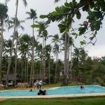 the pool amongst the coconut trees