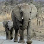 Foto di Springbok Lodge