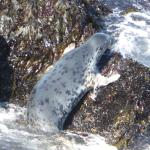 Curious seals...