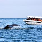 Embarcación - Yate 2 motores para avistamiento de Ballenas Jorobadas