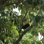 Daily visits from toucans