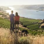 Overlooking estate vineyards at Maryhill