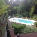 View of pool and back garden