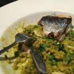 Sea bass with pearl barley risotto