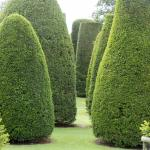 Packed House Topiary