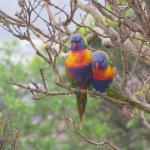 Beautiful birds frequent the garden