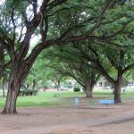 This is park at central part of Tsumeb actually