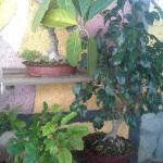 I bonsai