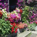 The flowers at Tradewinds Motel in Rockaway Beach - wonderful!