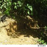 Jaguarundi Trail #3