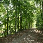 Bucolic Old Erie Path is a state park with river views through the trees