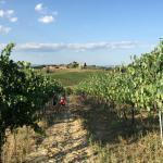 Vineyards and views