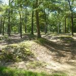 Photo de Cold Harbor Battlefield Park